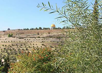 Photograph - Jerusalem Plants by Munir Alawi