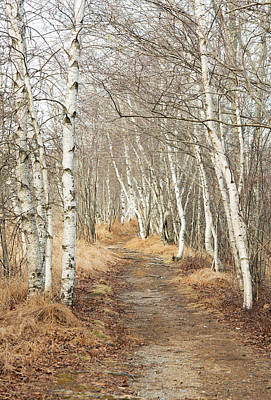 Photograph - Jessup Path In Winter by Gordon Ripley