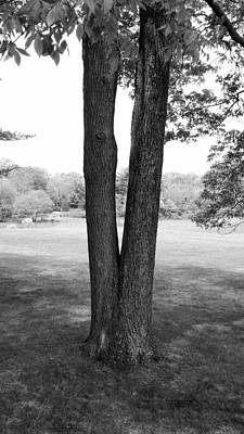 Photograph - Jesus Christ Tree B W by Rob Hans