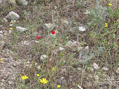 Photograph - Jesus Home Nazareth Wildflowers by Donna L Munro