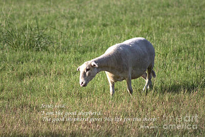 Photograph - Jesus The Good Shepherd by Ella Kaye Dickey