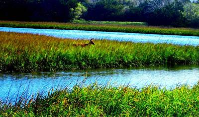 Jetty Mayport Buck #3 Art Print