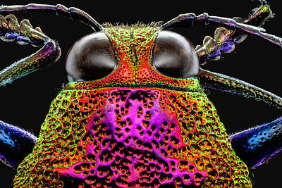 Photograph - Jewel Beetle 3x by Gary Shepard