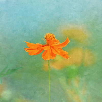 Photograph - Jewel Of The Garden by Kim Hojnacki