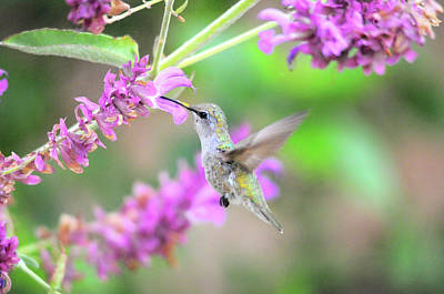 Photograph - Jewel Of The Garden by Lynn Bauer