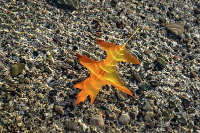 Photograph - Jewel Toned Autumn In Golden Orange by Georgia Mizuleva
