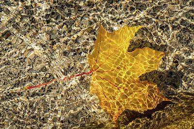 Photograph - Jewel Toned Autumn In Rippled Satin by Georgia Mizuleva