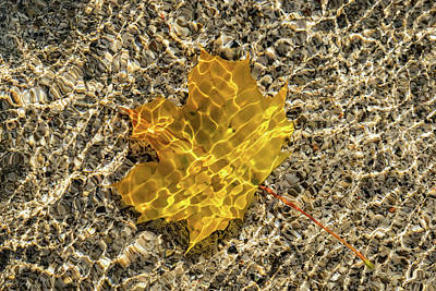 Photograph - Jewel Toned Autumn In Silky Golden Yellow by Georgia Mizuleva
