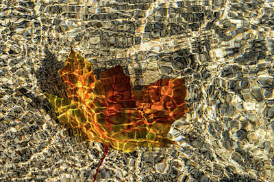 Photograph - Jewel Toned Autumn In Warm Yellow And Orange by Georgia Mizuleva