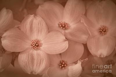 Photograph - Jeweled Blossoms by Patricia Strand
