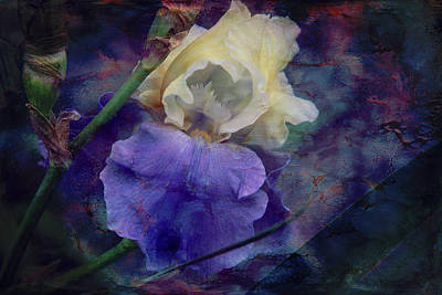 Art Print featuring the photograph Jeweled Iris by Toni Hopper
