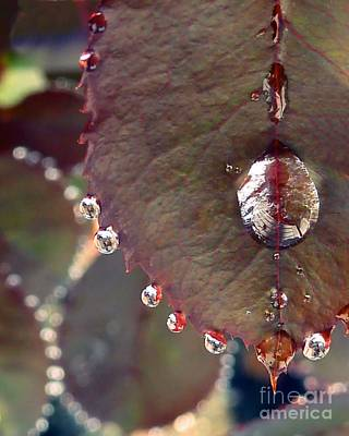 Photograph - Jeweled Leaves by Patricia Strand