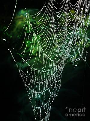 Photograph - Jeweled Web by Maria Urso