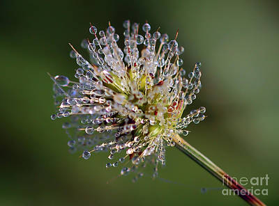 Photograph - Jewels In Nature - 2 by Kerri Farley