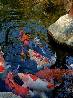 Photograph - Jfg Koi 1 by Phyllis Spoor