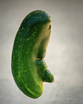 Photograph - Jimmy Durante Cucumber by Bill Swartwout Fine Art Photography