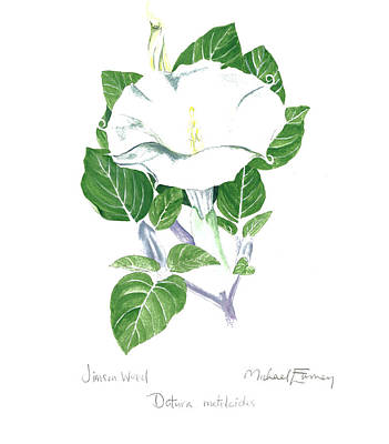 Painting - Jimson Weed by Michael Earney