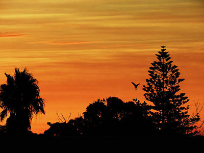 Photograph - Jingle Sunset by Mark Blauhoefer