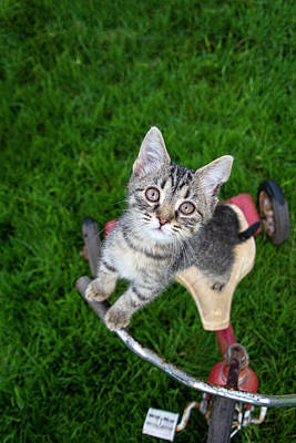 Photograph - Kitten On A Tricycle by Eleanor Caputo