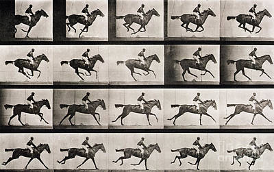 Black Horse Photograph - Jockey On A Galloping Horse by Eadweard Muybridge