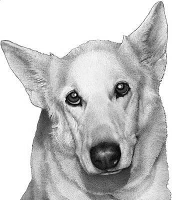 Police Dog Drawing - Jody by Lorraine Zaloom