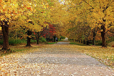 Photograph - Jogging Through Fall by Debbie Oppermann