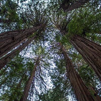 Photograph - John Muir Woods by Jeff Pfaller