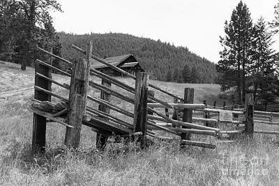 Photograph - Johnson Ranch by Louise Magno