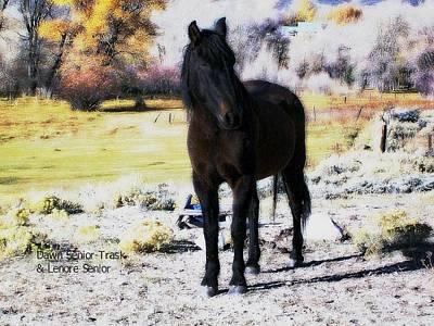 Digital Art - Joker At Herring Ranch by Lenore Senior and Dawn Senior-Trask
