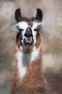 Photograph - Jolly Llama by Robin-Lee Vieira