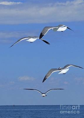 Photograph - Jonathan Livingston Seagull And Friends by Jean Wright