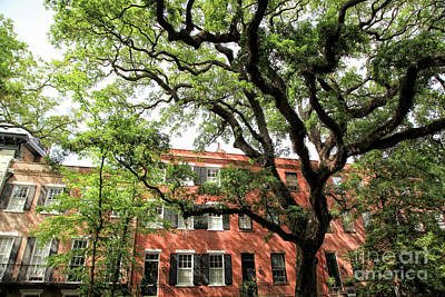Photograph - Jones Street Oak by Heather Green