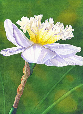 Daffodils Painting - Jonquil by Catherine G McElroy
