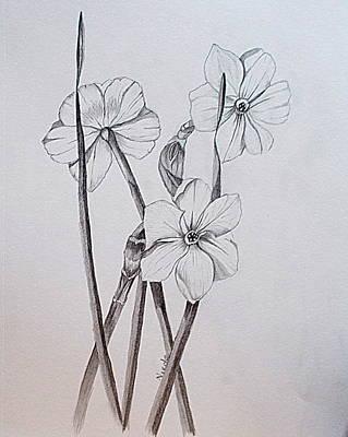 Jonquil Sketch Original by Nicole Curreri