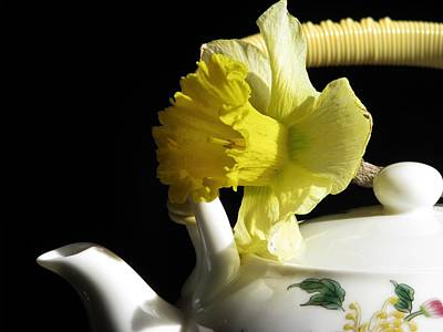 Photograph - Jonquil Tea by Angela Davies