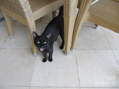 Photograph - Jordan Marriott Cat #2 by Donna L Munro