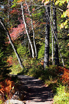 Photograph - Jordan Pond Trail by Patti Whitten