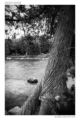 Photograph - Jordan Pond Tree by Brian Caldwell