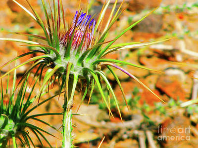 Photograph - Jordan Thistle Bright by Donna Munro