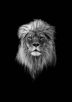 Roar Photograph - Joshua In Black And White by Everet Regal