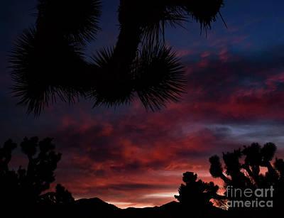Photograph - Joshua Sunset by Angela J Wright