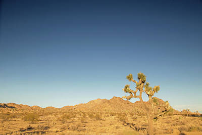 Photograph - Joshua Sunset by Kunal Mehra
