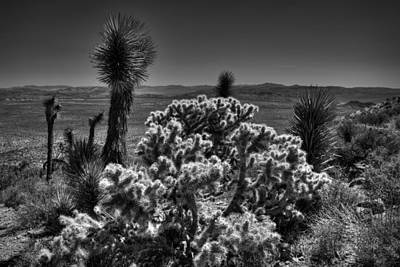 Photograph - Joshua Tree 001 Bw by Lance Vaughn