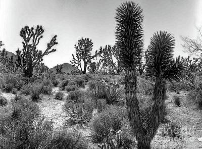 Photograph - Joshua Tree 2 by Blake Yeager
