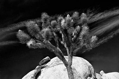 Photograph - Joshua Tree And Boulders In Black And White At Joshua Tree National Park by Randall Nyhof