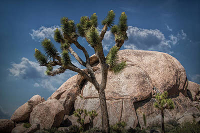 Photograph - Joshua Tree And Boulders In Joshua Tree National Park by Randall Nyhof