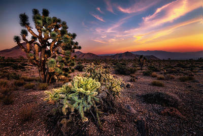 Photograph - Joshua Tree And Cactus At Sunset by Michael Ash