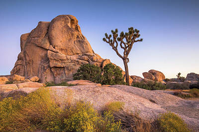 Photograph - Joshua Tree And Intersection Rock by Davorin Mance