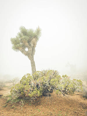 Photograph - Joshua Tree And Juniper In Fog by Alexander Kunz