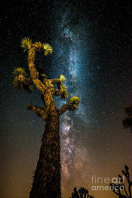 Photograph - Joshua Tree And Milky Way by Jim DeLillo